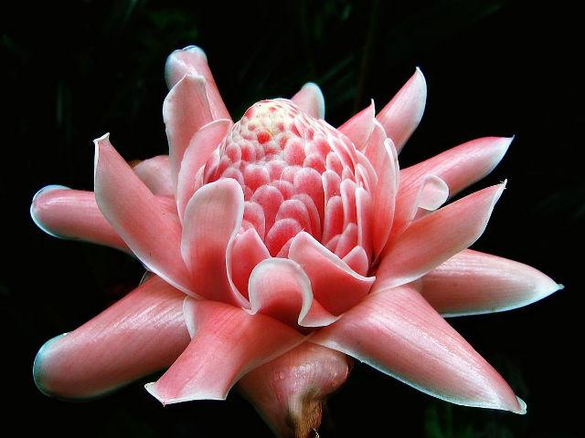 The health benefits of Zingiberaceae