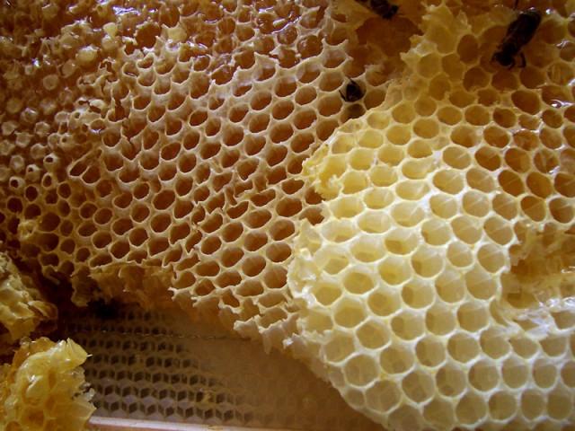 Honey Comb -- Beeswax