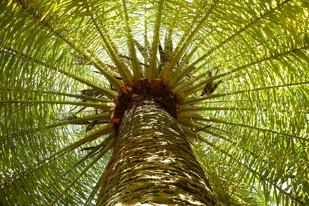 Palm tree in Abram's dream